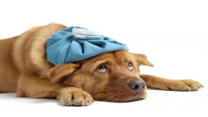 Pets and Allergies