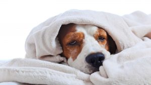 Over-The-Counter Medications For Dogs