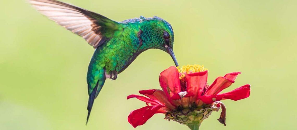 How to Care for Hummingbirds